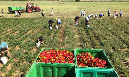 Hercegovina preko Podravke ulazi na tržište EU