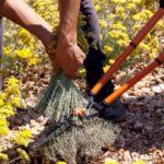 Tvrtka Soldo Mont iz Posušja, ostala i opstala baveći se uzgojem i preradom smilja