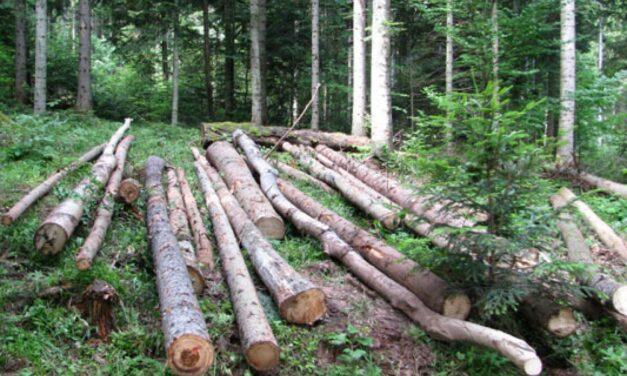 Znanstvenici upozoravaju: Nastavimo li s krčenjem prašuma, nepovratno ćemo izgubiti biološku raznolikost i pokrenuti nove epidemije