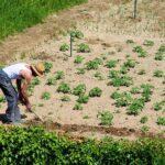 Krediti do 1,4 mil. KM za poljoprivredne investicije