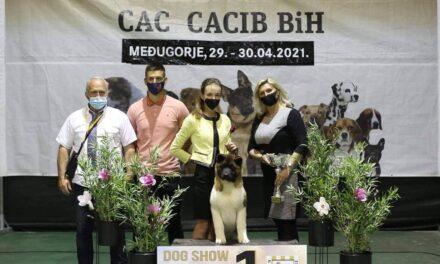 Mlada handlerica i štenac američke akite iz Posušja zajedno do Vrhunskih rezultata