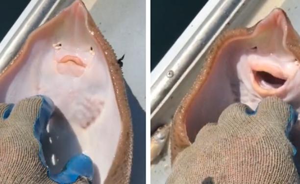 VIRALNO: Ribar poškakljao ražu, njena reakcija prikupila više od 100 milijuna pregleda