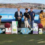 Izlagači iz više od 30 Zemalja sudjelovali na izložbi pasa u Posušju