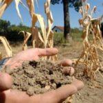Zbog suše rastu cijene poljoprivrednih proizvoda, smanjen urod povećava troškove