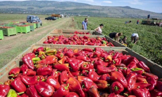 Iz Hercegovine za Podravku izvozi se 1.700 tona rajčice i rog-paprike
